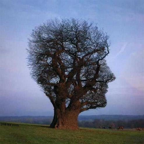headtree.jpg